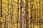 Lake tahoe fall foliage_2