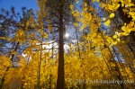 Lake tahoe fall foliage_3