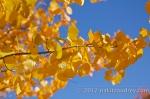 Lake tahoe fall foliage_4