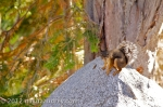Squirrel in emerald bay lake tahoe