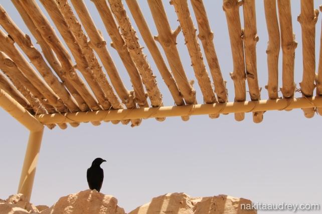 Masada israel 3