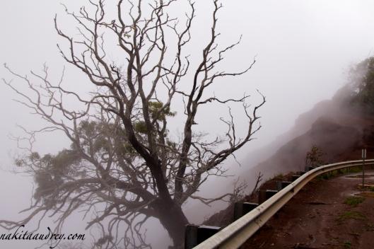 Waimea canyon drive foggy