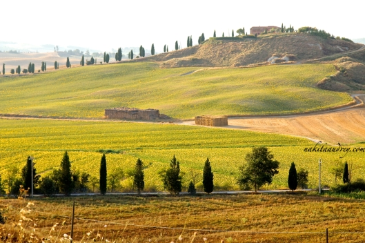 Quintessential rolling hills of Tuscany